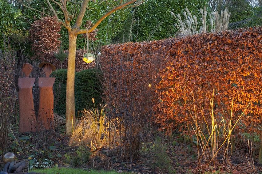 29878-Fagus-beech-hedge-modern-fall-color-lights