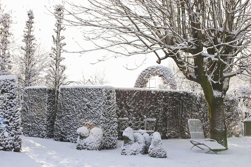 31480-Taxus-yew-hedge-modern-garden