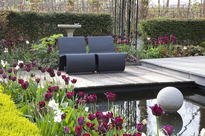 33766-Taxus-yew-hedge-modern-garden