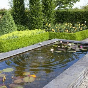 34284-Buxus-boxwood-Taxus-yew-hedge-formal-modern-estate-garden-fountain