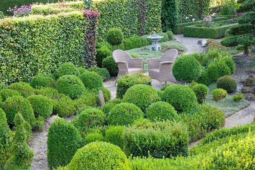 34856-Fagus-beech-hedge-Taxus-yew-boxwood-Buxus-country-garden
