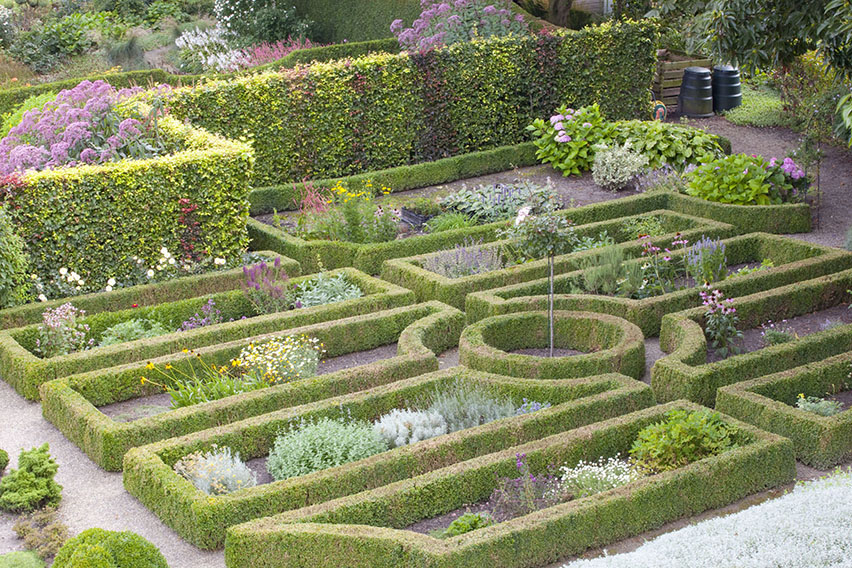 34882-Buxus-boxwood-Fagus-beech-hedge-formal-garden
