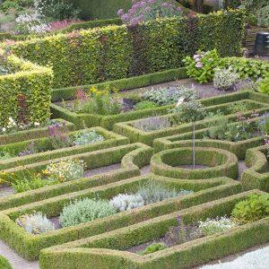 34882-Buxus-boxwood-Fagus-beech-hedge-formal-garden