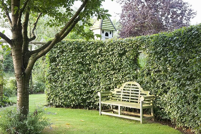 34918-Carpinus-hornbeam-privacy-hedge-formal-modern-estate-garden-bench-window