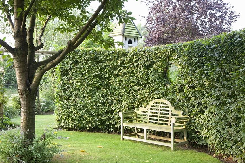 34918-fagus-beech-hedge-formal-modern-estate-garden-contemporary-curve-bench