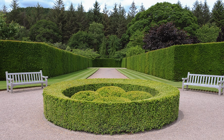 359694899-Taxus-yew-hedge-buxus-park-estate-min