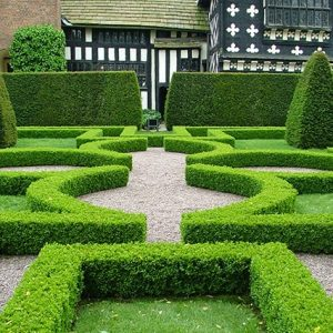 363759-buxus-boxwood-thuja-arborvitae-hedge-privacy-tall-low-border-knot-garden-formal-country-estate-restort-lodge-cottage-spa
