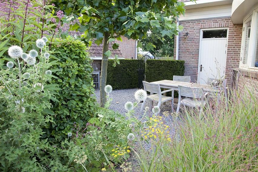 37270-Taxus-yew-hedge-Fagus-beech-urban-garden-suburban-patio-courtyard-summer