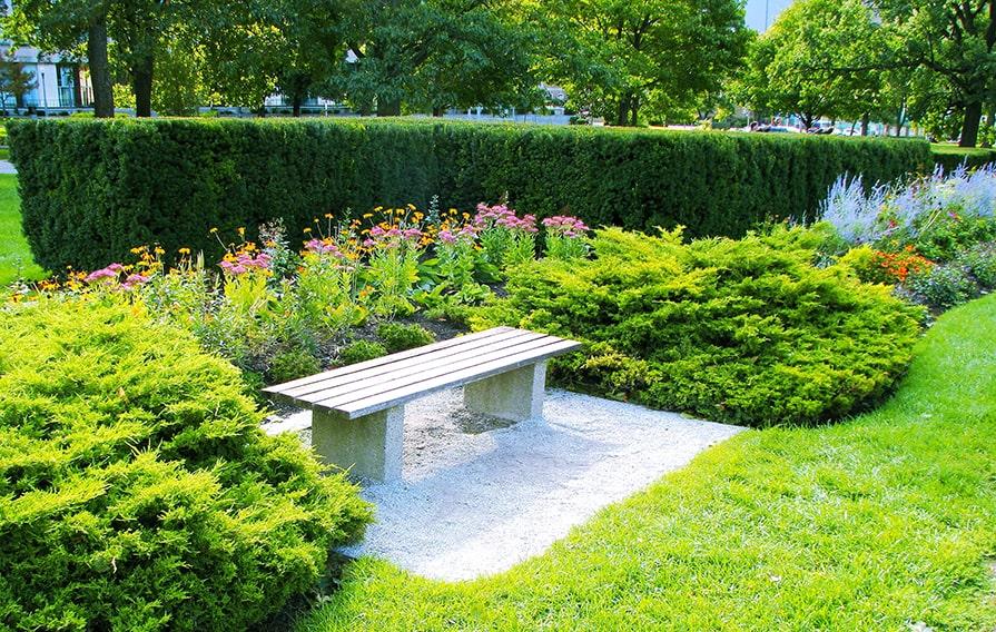 384923812-Taxus-yew-hedge-bench-suburban-estate-urban-city-public-garden-min