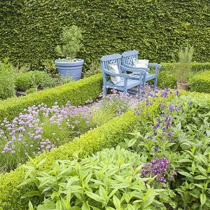 38510-boxwood-buxus-fagus-beech-hedge-privacy-country-cottage-knot-garden-bench-herb-flower-border