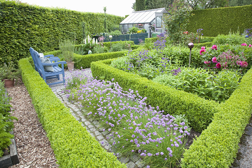 38516-Fagus-Beech-boxwood-Buxus-hedge-country-cottage-garden-knot-privacy