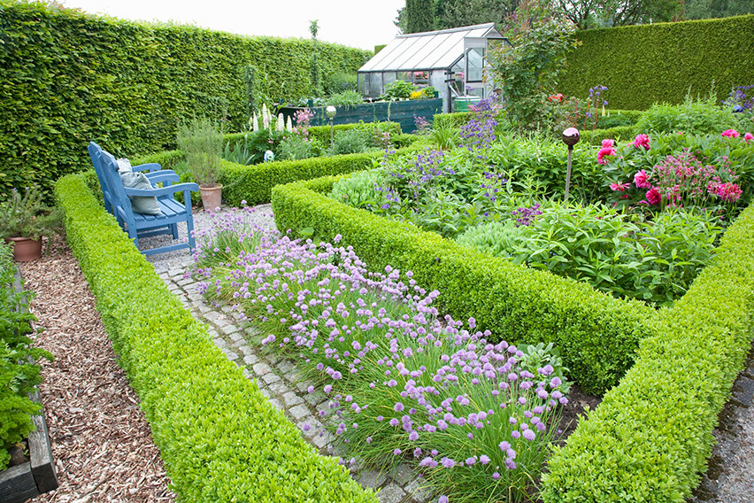 38516-Fagus-Beech-boxwood-Buxus-hedge-country-knot-garden