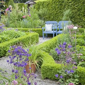 38517-Hornbeam-Carpinus-boxwood-Buxus-hedge-country-cottage-knot-garden-flowers-path