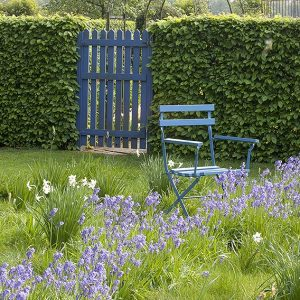 39187-Carpinus-hornbeam-hedge-country-cottage-garden-seating-privacy-gate-spring-hyacinth-daffodil-flowers