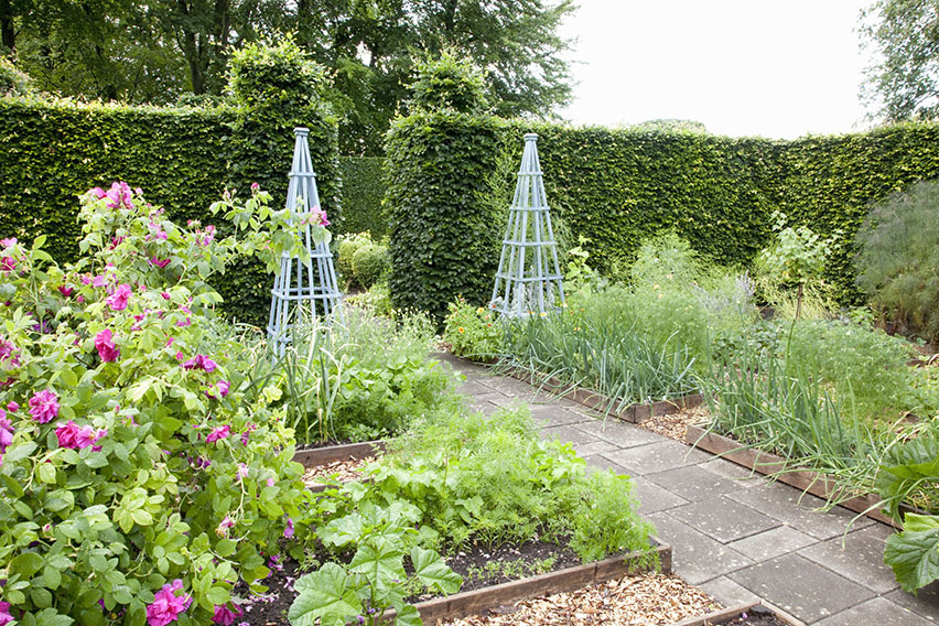 40486-Fagus-hedge-beech-estate-country-cottage-vegetable-garden40486-Fagus-hedge-beech-estate-country-cottage-vegetable-garden