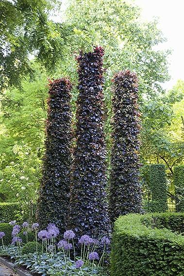 43790-Fagus-beech-purple-copper-hedge-sculpture-estate