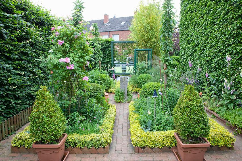 43915-Fagus-beech-privacy-hedge-urban-courtyard-quiet