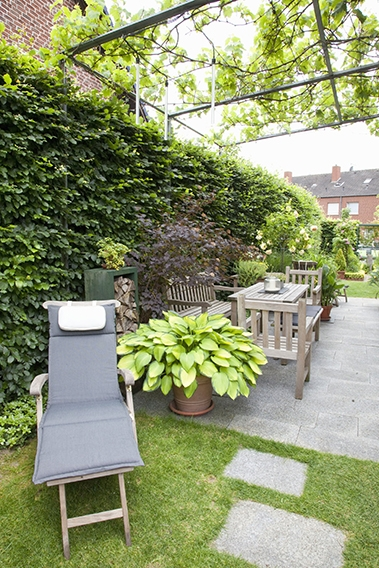 43917-Fagus-beech-urban-back-yard-patio-space-tall-privacy-hedge-noise-block