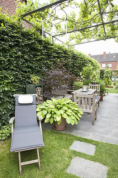 43917-Fagus-hedge-beech-urban-city-patio-chair-planter-arbor-trellis-privacy