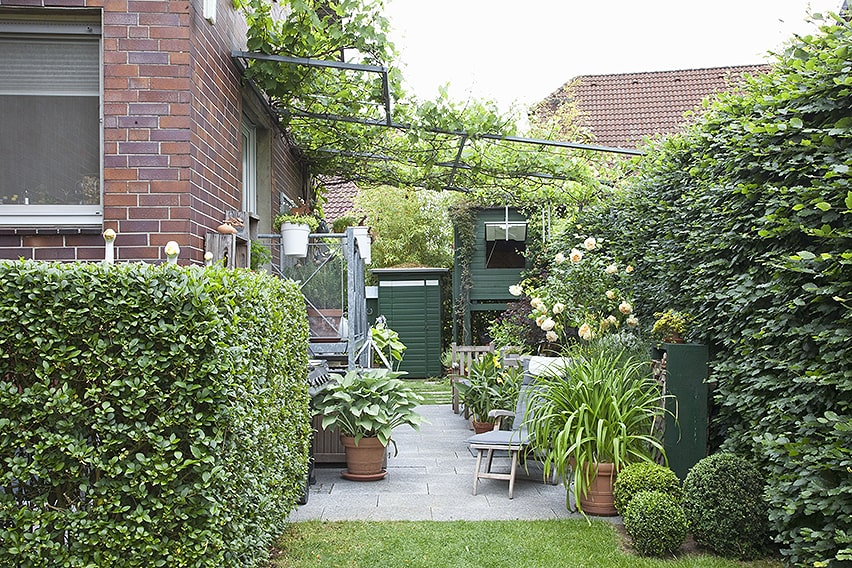 43924-Fagus-hedge-beech-urban-city-privacy-tall-noise-reduction-green-patio-space