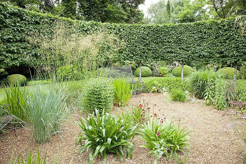 44982-Fagus-hedge-beech-country-garden-summer-grass-curve-contemporary-design