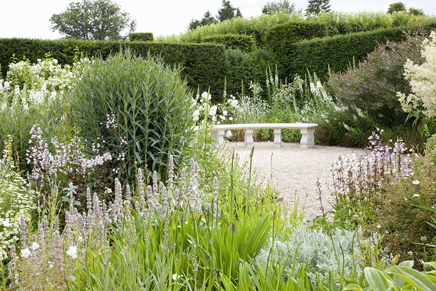 45014-Taxus-hedge-yew-country-garden