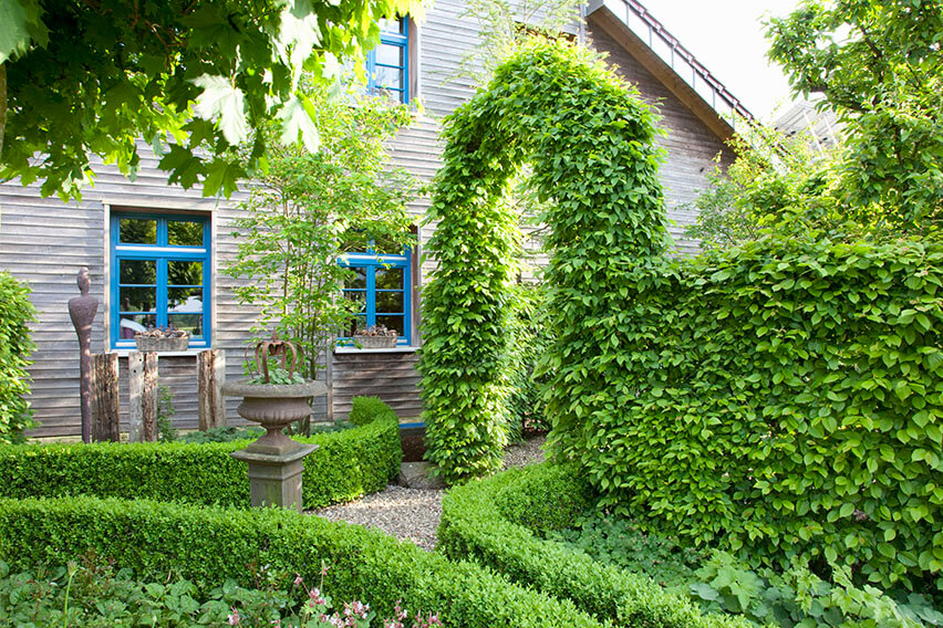 47503-fagus-beech-buxus-boxwood-hedge-screen-cottage-garden-house-yard-entry