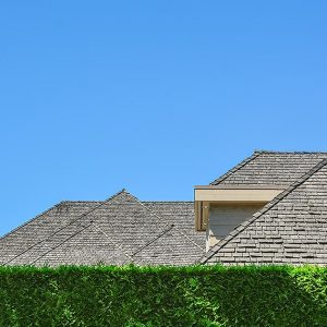 510585928-Thuja-Green-Giant-residential-suburban-estate