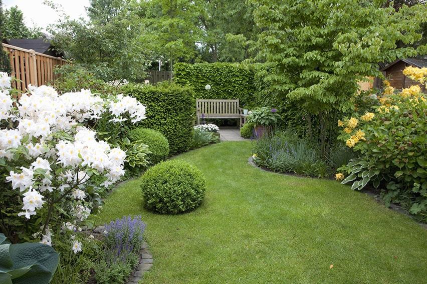 52640-Taxus-Fagus-hedge-yew-beech-country-garden