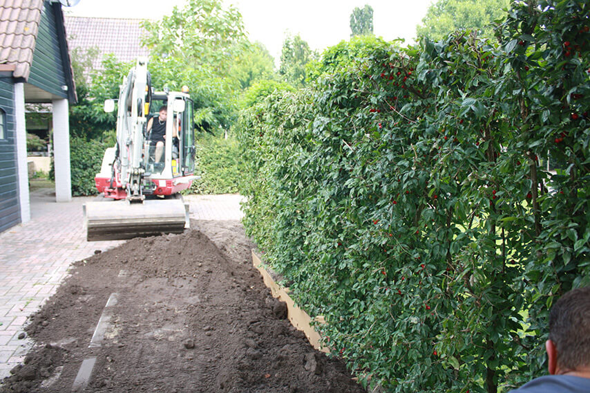 5268943-Planting-Cornus-mas-Cornelian-cherry-planting-filling-InstantHedge