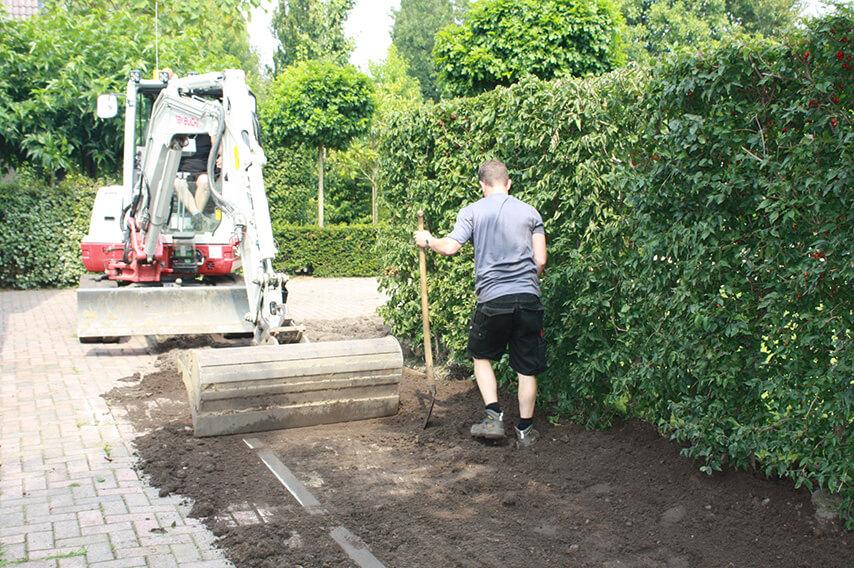 5268955-Planting-Cornus-mas-Cornelian-cherry-planting-InstantHedge-filling
