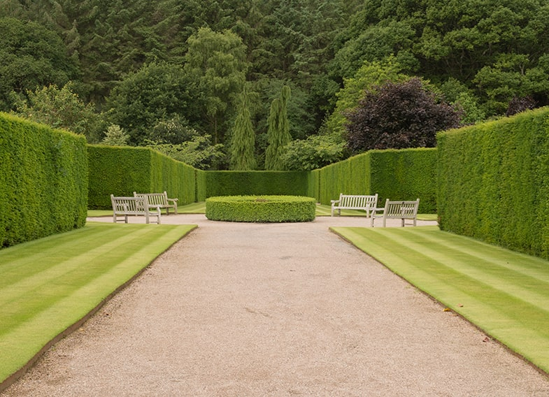 536097199-Taxus-yew-hedge-buxus-estate-park-min