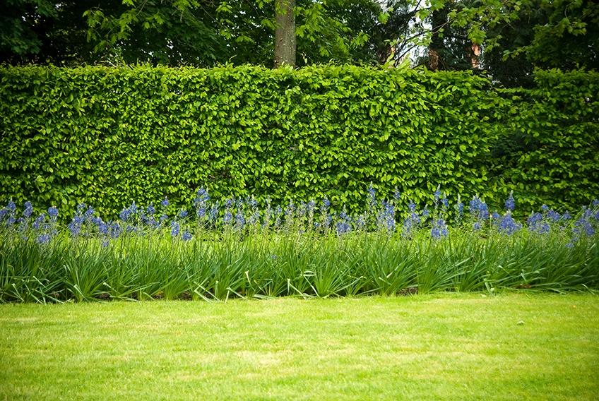 54131014-fagus-beech-privacy-hedge-suburban-country-garden-park-border-flowers