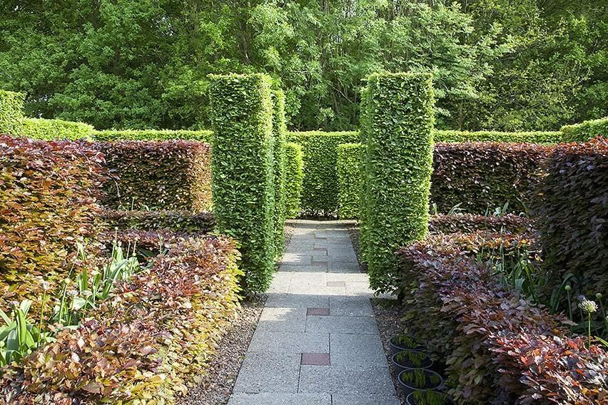 55818-fagus-beech-green-purple-copper-hedge-path-formal-modern-estate-garden-varied-heights-design-landscape