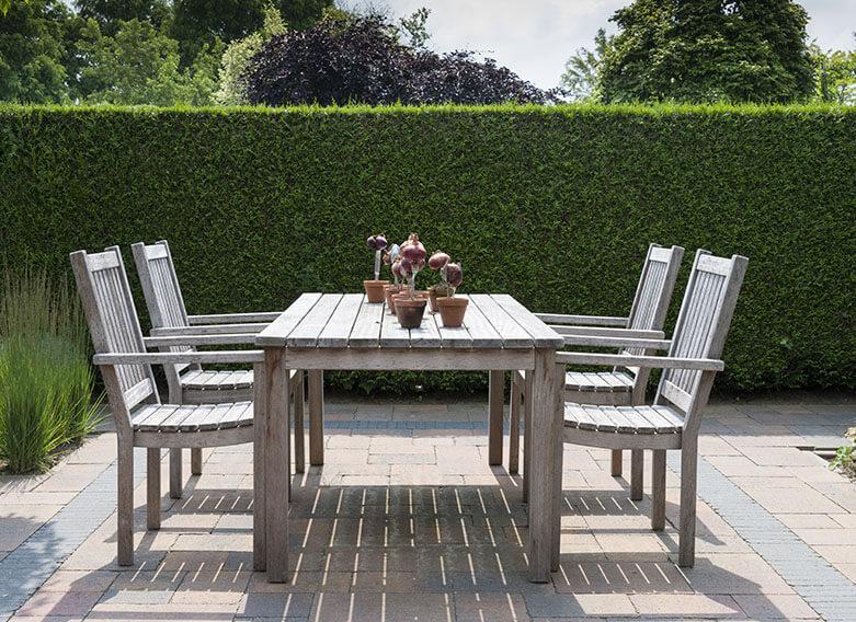 577345444-Thuja-occidentalis-american-arborvitae-suburban-courtyard-patio-outdoor-dining-modern