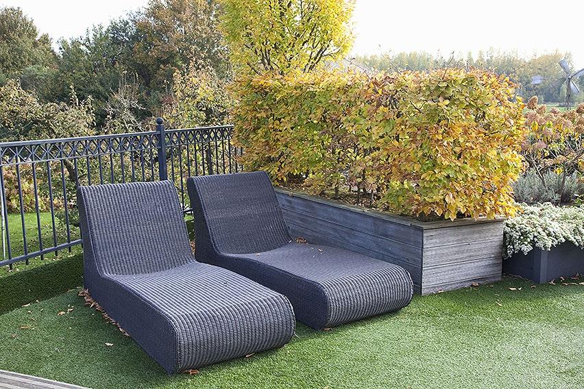 58216-fagus-beech-hedge-planter-container-garden-fall-color-deciduous-patio-urban-balcony-seating-rooftop