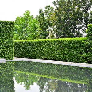 620778515-fagus-beech-privacy-hedge-modern-contemporary-design-estate-garden-pond-pool-water