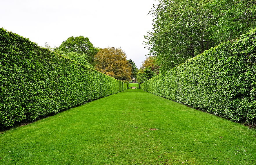 695629834-Fagus-beech-privacy-hedge-country-estate-park-windbreak-lawn-formal