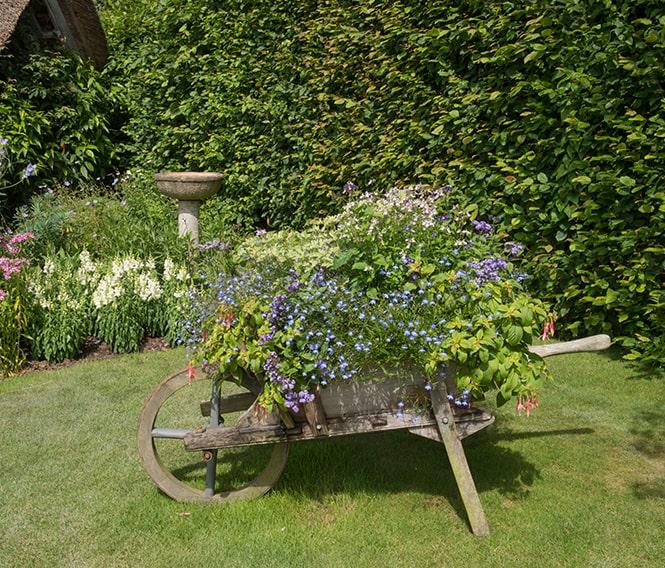 734522479-Fagus-beech-privacy-hedge-country-lawn-cottage-garden-flowers-summer-wheelbarrow