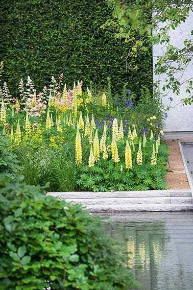 N0917873_140-Taxus-garden-courtyard
