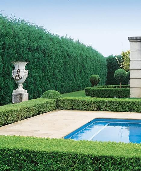 N1000401_140-Buxus-Thuja-occidentalis-formal-pool-estate