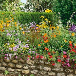 N1001917_140-Thuja-Virescens-arborvitae-country-garden