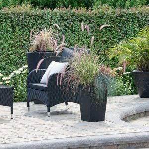 N1003723_140-Acer-campestre-hedge-maple-modern-formal-garden-InstantHedge-patio-urban-suburban
