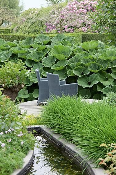 N1004467_140-Thuja-arborvitae-hedge-formal-water-garden-modern