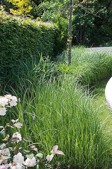N1004469_140-Carpinus-hornbeam-hedge-country-garden-flower-bed-grass