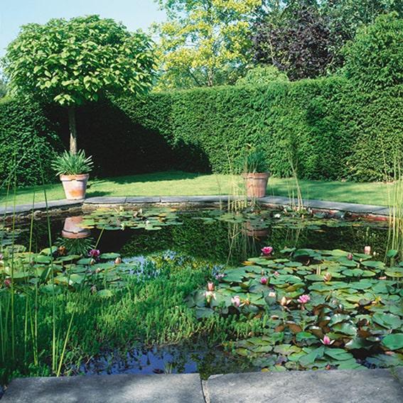 N1005099_140-Taxus-yew-hedge-formal-pool-garden