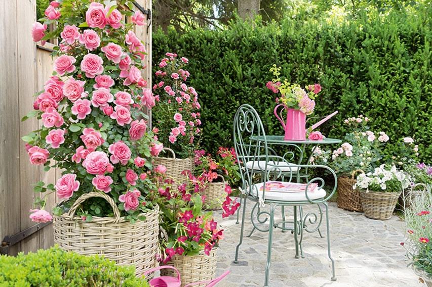 N1005340_140-Taxus-planting-gardening-estate-cottage-country