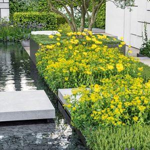 N1005439_140-Fagus-beech-short-hedge-formal-water-garden-pond-modern-contemporary