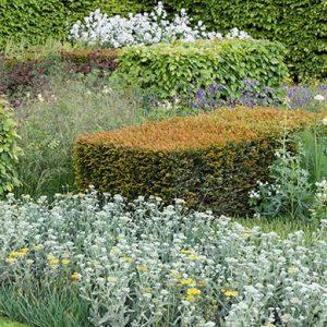 N1005443_140-Taxus-Fagus-yew-beech-hedge-modern-layered-suburban-urban-garden