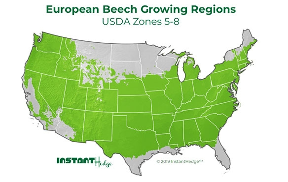 Privacy hedges ideal for zone 5-8. Best bushes for privacy. Evergreens for Privacy growing region.